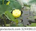 ancient lotus, lotus, lotu 32449613