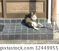 cat, pussy, a cat 32449955