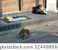 cat, pussy, a cat 32449956