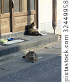แมว,สัตว์เลี้ยง,ทางเข้า 32449958