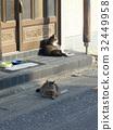 cat, pussy, a cat 32449958