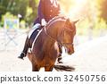 dressage, horse, rider 32450756