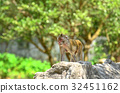 Wildlife monkey in green nature 32451162