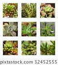 肉质植物 植物 植物学 32452555