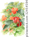 冬櫻花 植物 植物學 32454594
