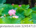 lotus, bloom, blossom 32454713