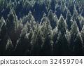 松林 山林 森林 32459704