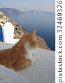 A cat in Santorini , Greece 32469326