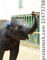 작은 코끼리 32473798