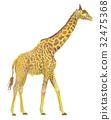 giraffe, giraffa, animal 32475368