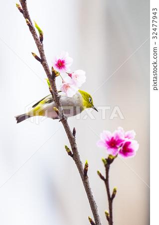 一隻鳥 32477943