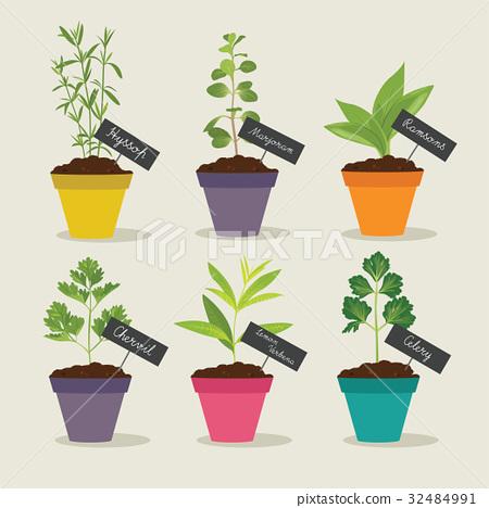 Herb garden with pots of herbs set 3, vector illus 32484991