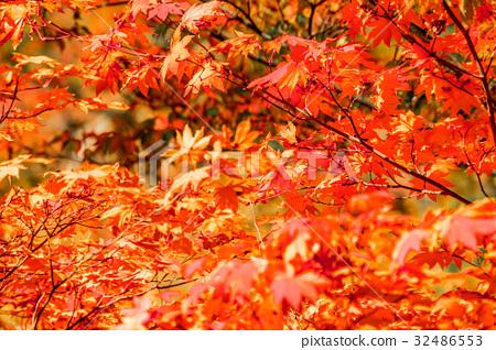 [宮城縣]秋天的落葉 32486553