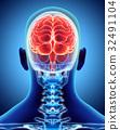 Human Internal Organic - Brain. 32491104