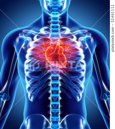 3D illustration of Heart, medical concept. 32491111