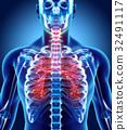 3D illustration of Larynx Trachea Bronchi. 32491117