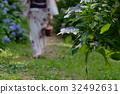 绣球花 浴衣 花朵 32492631