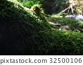 녹색, 잎, 배경 32500106
