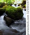 苔藓 绿色 岩石 32500107