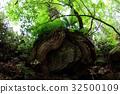 녹색, 잎, 배경 32500109