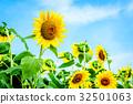 向日葵園 向日葵 花朵 32501063