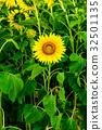 꽃, 여름, 식물 32501135