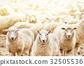 农业 动物 牲畜 32505536