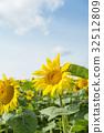 ทานตะวัน,ทุ่งดอกไม้,ฤดูร้อน 32512809