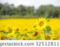 ทุ่งดอกไม้,ฤดูร้อน,หน้าร้อน 32512811