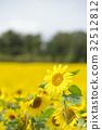 ทุ่งดอกไม้,ฤดูร้อน,หน้าร้อน 32512812