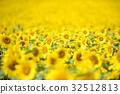 ทานตะวัน,ทุ่งดอกไม้,ฤดูร้อน 32512813