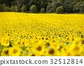 ทุ่งดอกไม้,ฤดูร้อน,หน้าร้อน 32512814