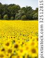 ทุ่งดอกไม้,ฤดูร้อน,หน้าร้อน 32512815