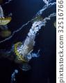 水母 海蜇 美杜莎 32516766