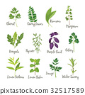 Set of herbs 2  isolated, vector illustration 32517589