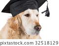 狗 狗狗 猎犬 32518129