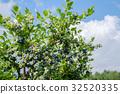 種植園 農場 藍莓 32520335