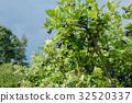 種植園 農場 藍莓 32520337