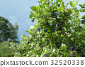 種植園 農場 藍莓 32520338