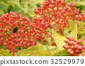 잎, 이파리, 잎사귀 32529979