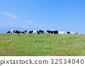 cow, cattle, cows 32534040