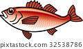黑喉海鲈 多德雷莱玻德斯 鱼 32538786