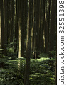 forest, forests, forrest 32551398