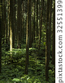 forest, forests, forrest 32551399