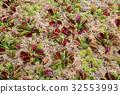 botanic, botanical, foliage 32553993