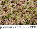 botanic, botanical, foliage 32553994