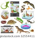 reptile,amphibian,pet 32554411