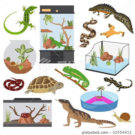 Pet reptiles appliance icon set flat style  32554411