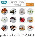 Pet insects breeds icon set flat style isolated  32554418