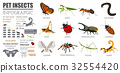 Pet insects breeds icon set flat style isolated  32554420